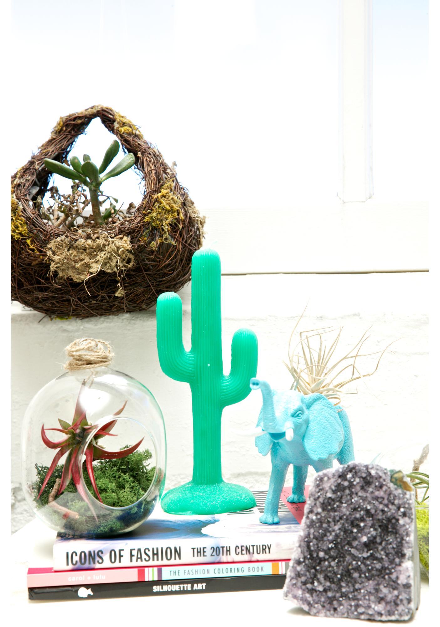 Cactus Coolah Candle