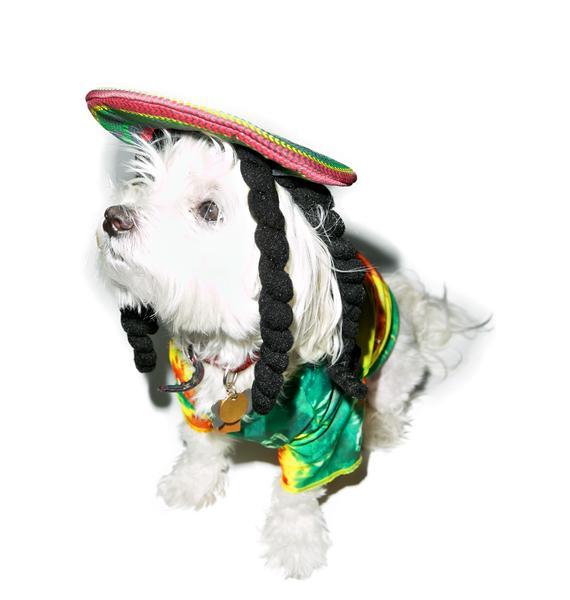 Marley N' Me Dog Costume