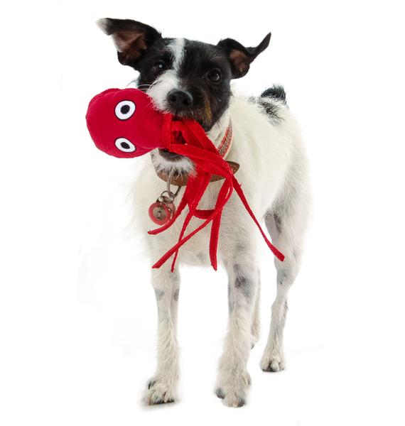 Baby Squid Dog Toy