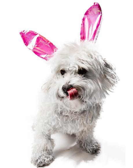 Barkin Bunny Dog Headband