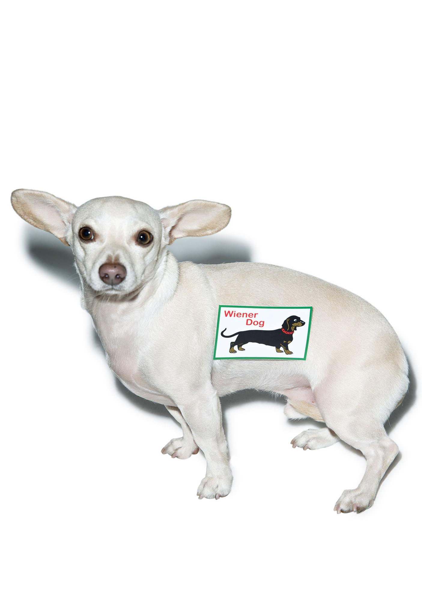 Weiner Dog Sticker