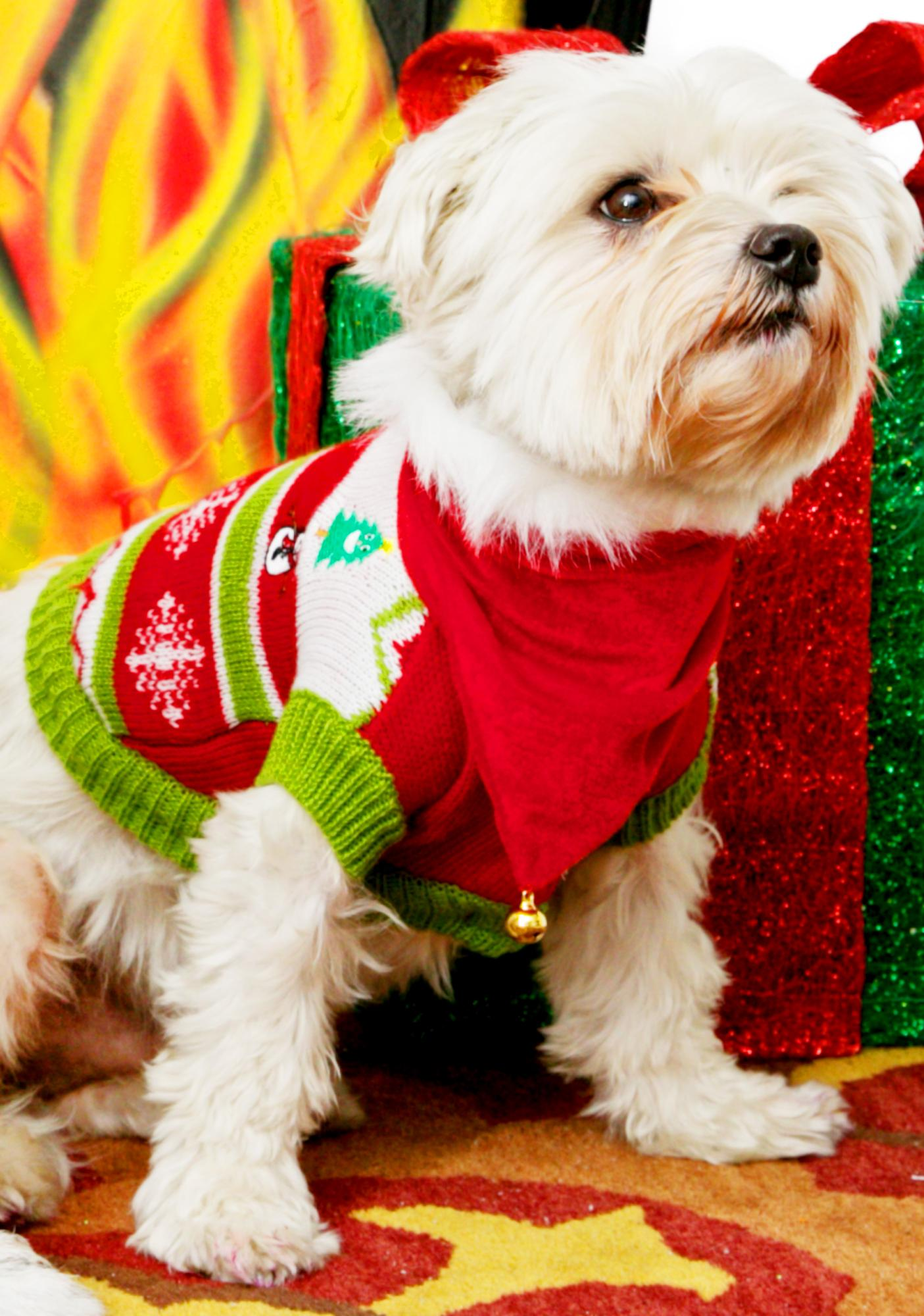 Puppy Present Dog Sweater