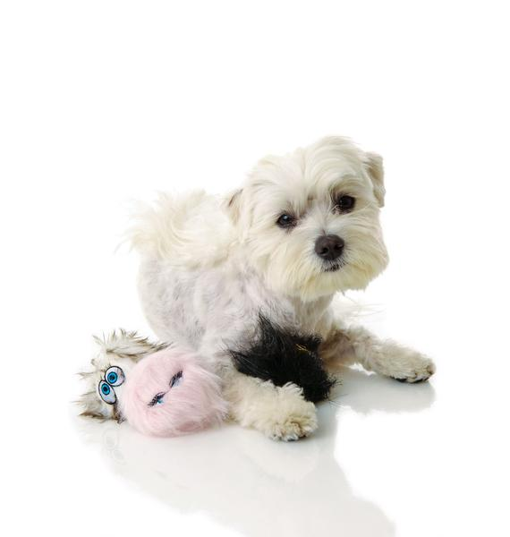 Man's Best Friend Squeekers Dog Toy